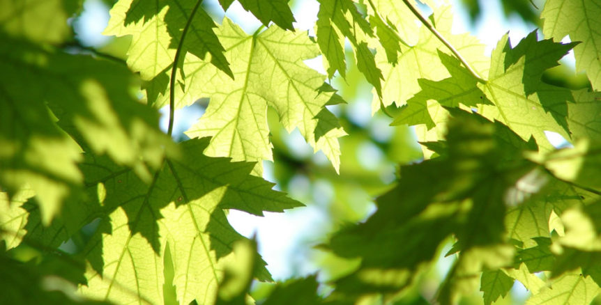 keep trees healthy - green leaves on summer day