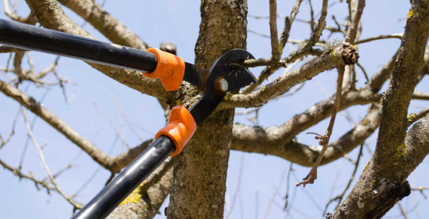 tree trimming & tree pruning Milwaukee arborist - M&M Tree Care in SE Wisconsin