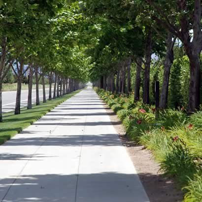Commercial Tree Care by M&M Tree Care in Milwaukee, WI