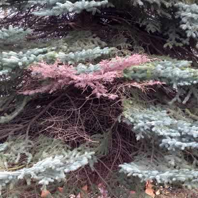 Tree Disease Treatments by M&M Tree Care in Milwaukee, WI
