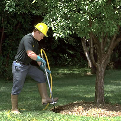 Tree & Plant Fertilizer by M&M Tree Care in Milwaukee, WI