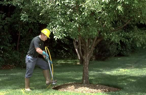 Tree & Plant Fertilizer services by M&M Tree Care in Milwaukee, WI