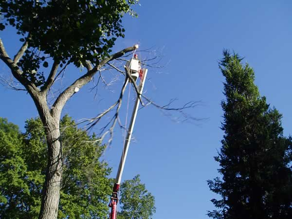 Tree Removal Service - M&M Tree Care