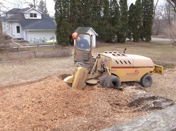 Stump Removal Service - M&M Tree Care