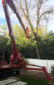 Tree Trimming & Pruning - M&M Tree Care