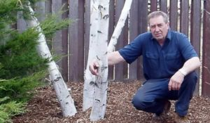 Robert Miller Sr - M&M Tree Care