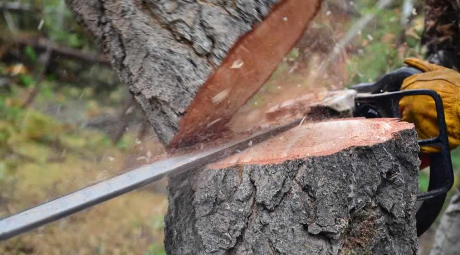 Tree Stump Removal by M&M Tree Care in Milwaukee