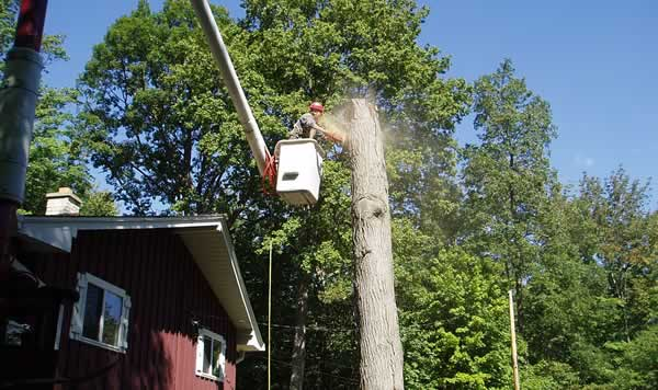Tree Removal Cost - service by M&M Tree Care